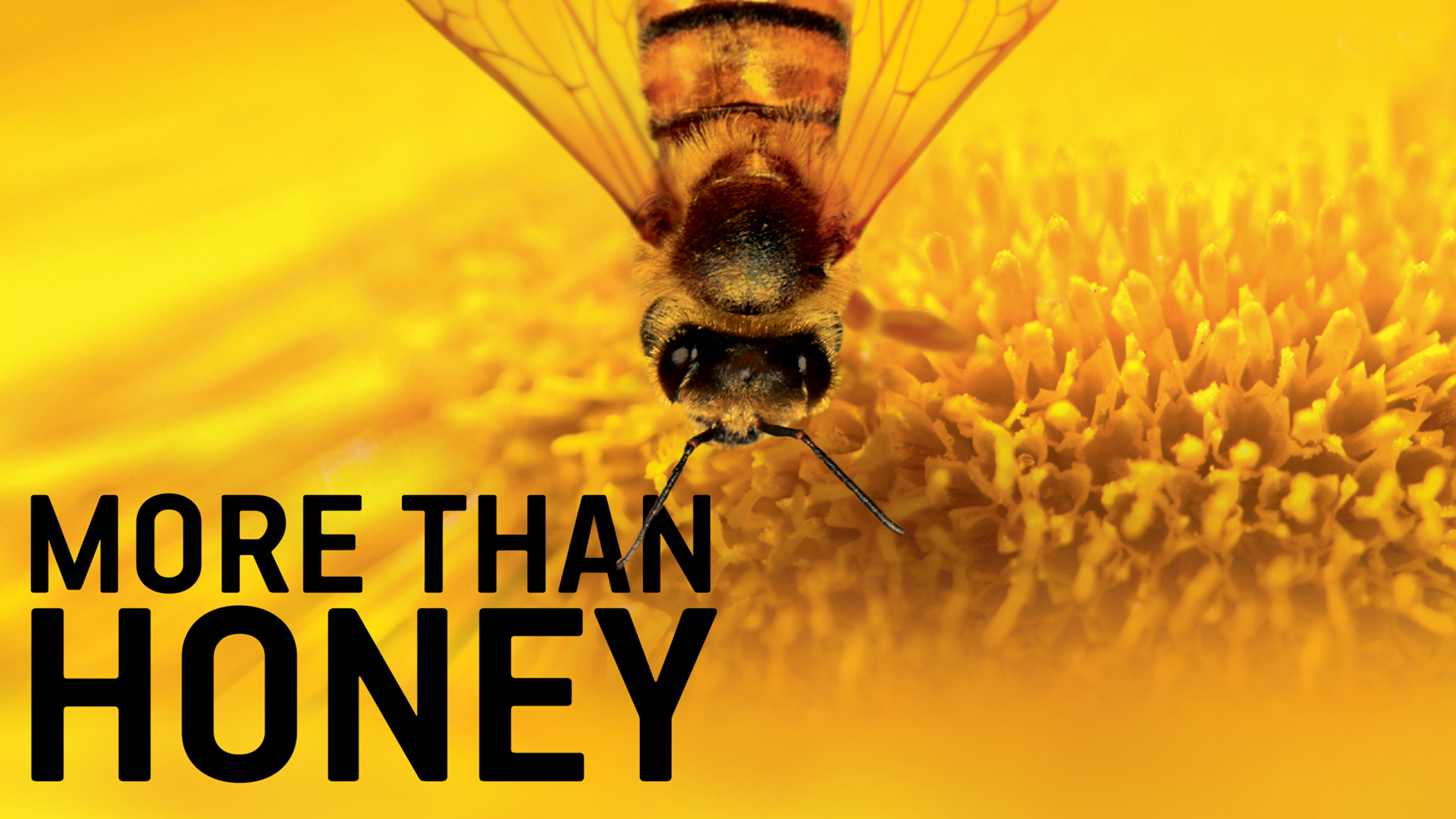 more-than-honey-film